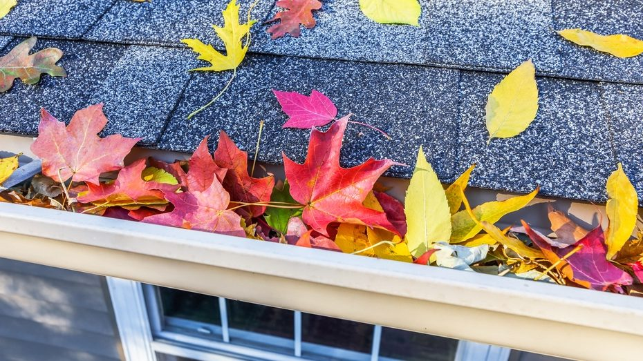 Fall leaves against a new roof.